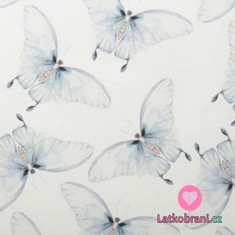 Teplákovina motýli modrásci na bílé