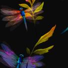 Teplákovina potisk pestrobarevné vážky v noci