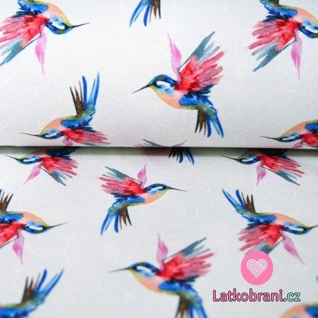 Teplákovina kolibřík na jemně šedé