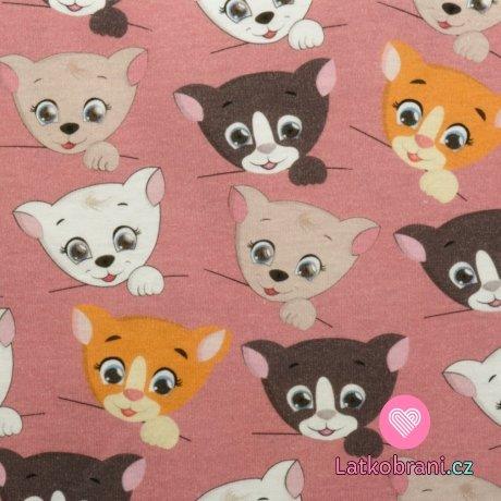 Bavlněný úplet vykukující koťátka na růžové