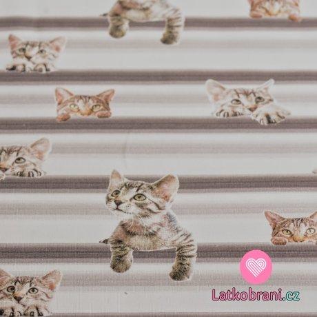 Úplet digitisk vykukující kočičky na proužku