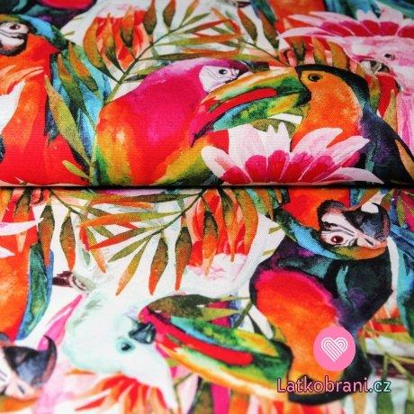 Plátno papoušci Lory