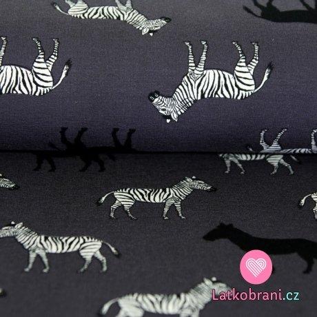 Úplet zebry na šedé tmavější
