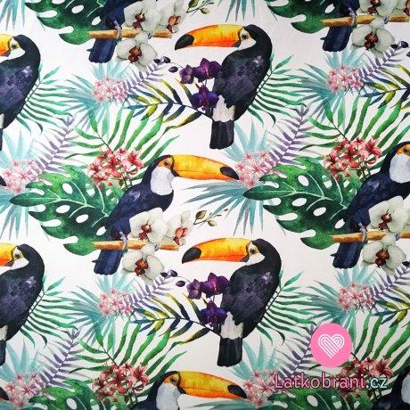 Úplet potisk tukani mezi exotickými květinami
